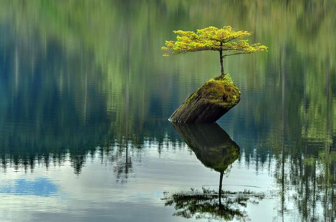cây cối có linh hồn không