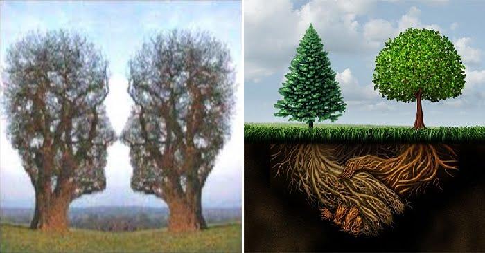 cây cối có cảm xúc không