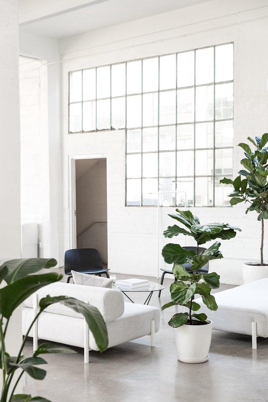 everlane-office