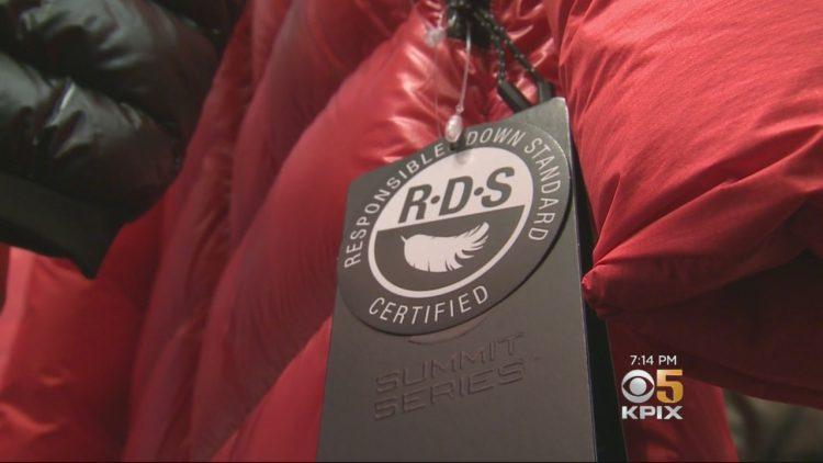 Chứng nhận RDS là gì?