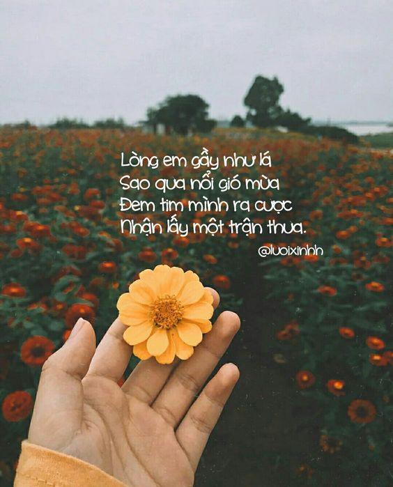 Cap thơ tình yêu hay